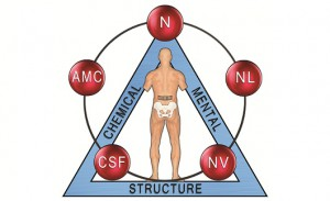 Applied Kinesiology Icon